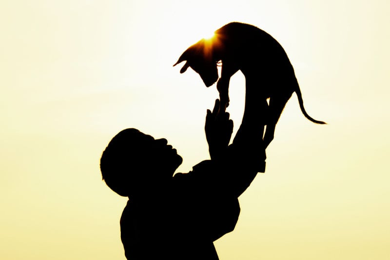 Silhouette of a person lifting up their cat