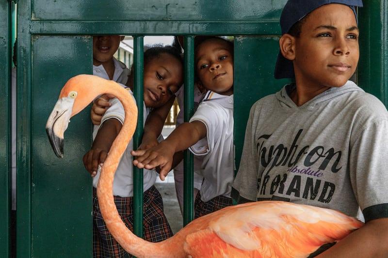 boy holding flamingo